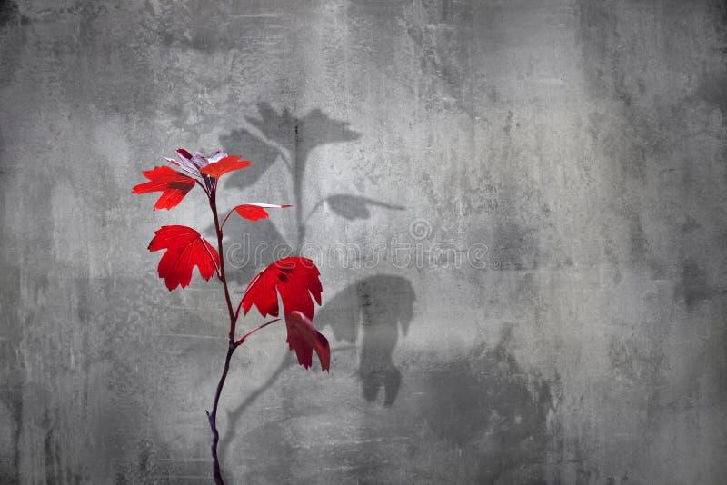 水泥背景中红叶的秋枝 极简主义城市自然形象 图库摄影