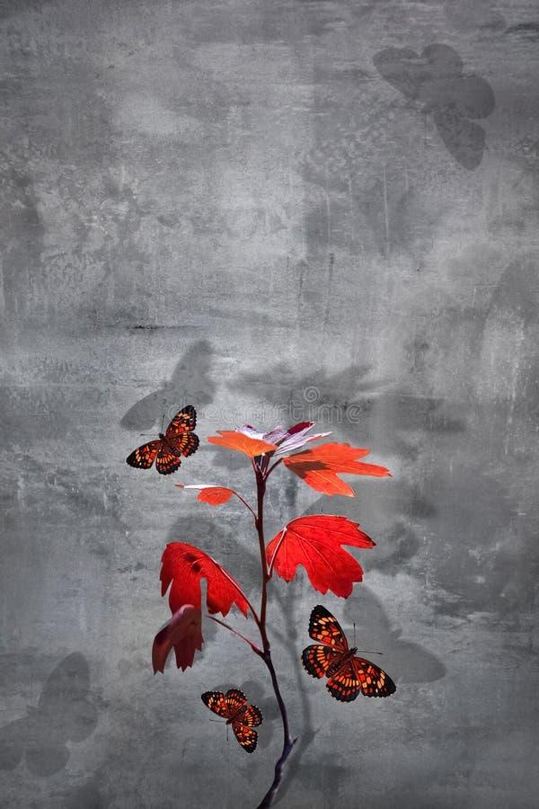 水泥背景红叶蝴蝶的枝 极简主义城市自然形象 复制空间 免版税图库摄影