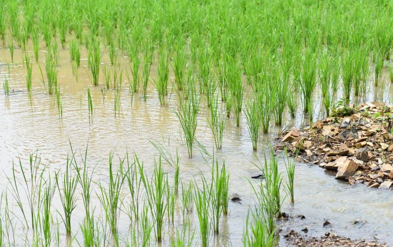 水流量米领域 图库摄影