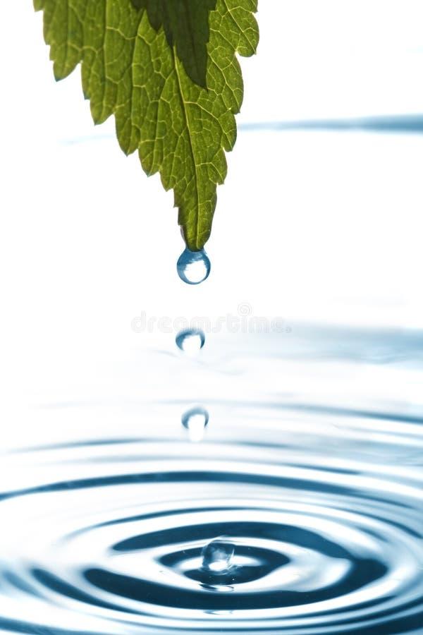 水滴叶子水 库存照片