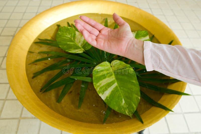 水滴水下落从妇女的手的到与异乎寻常的叶子的一个水池里 免版税库存图片