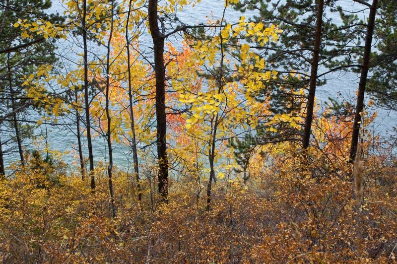 水看法通过浇灌的树在蛇海湾 免版税库存图片