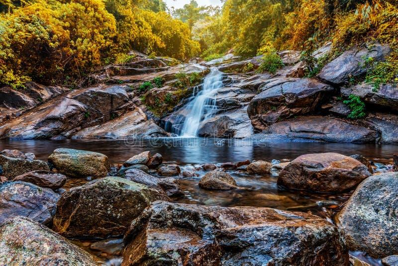水秋天在有绿色树自然的森林里 图库摄影