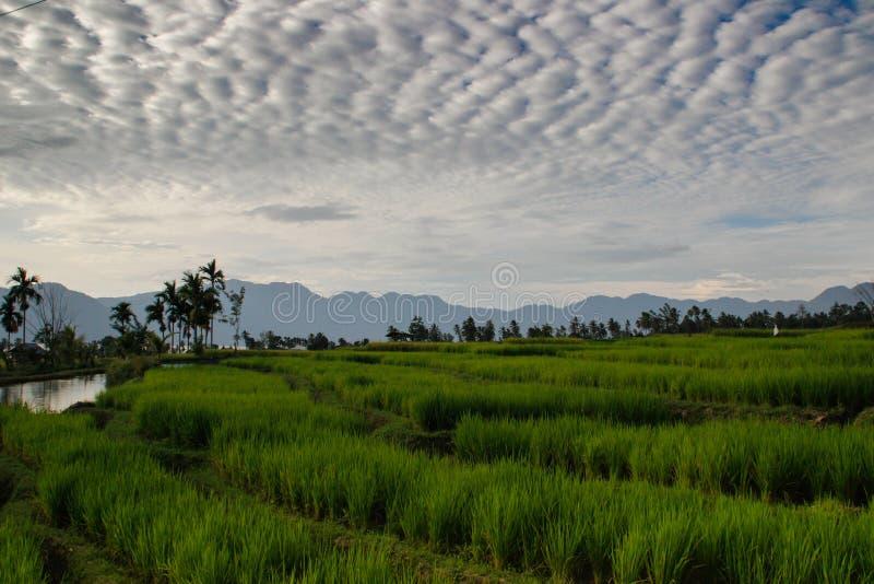 水稻领域在苏门答腊海岛上的印度尼西亚  库存图片