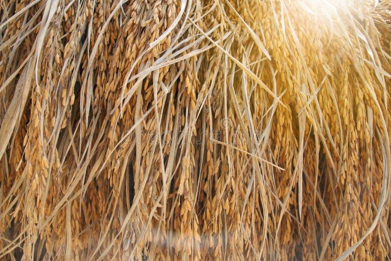 水稻领域挂掉电话与照明设备火光 免版税库存图片