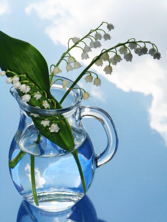 水罐百合谷 图库摄影
