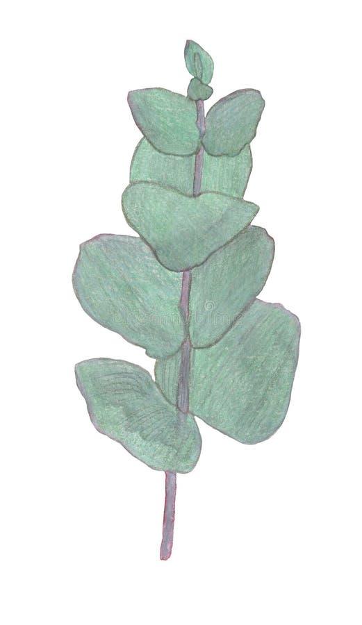 水色桉叶枝 区系设计要素 手绘图 贺卡 免版税库存照片