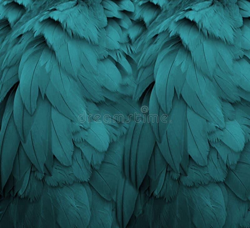 水色羽毛 免版税图库摄影