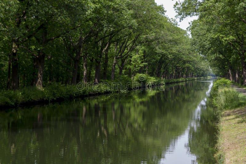 水路在比利时,有橡树胡同的人造运河 免版税库存照片
