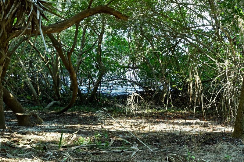 水通过一束树 库存图片