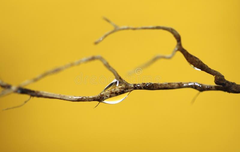 水, marco滴  免版税图库摄影