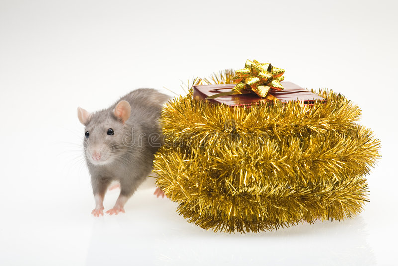 汇率和圣诞节礼物 库存照片