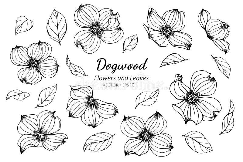 汇集套得出例证的山茱萸花和叶子 向量例证