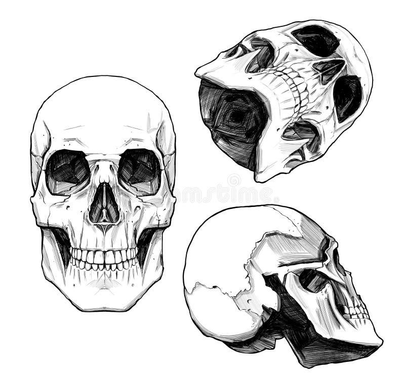 汇集绘了头骨 库存例证