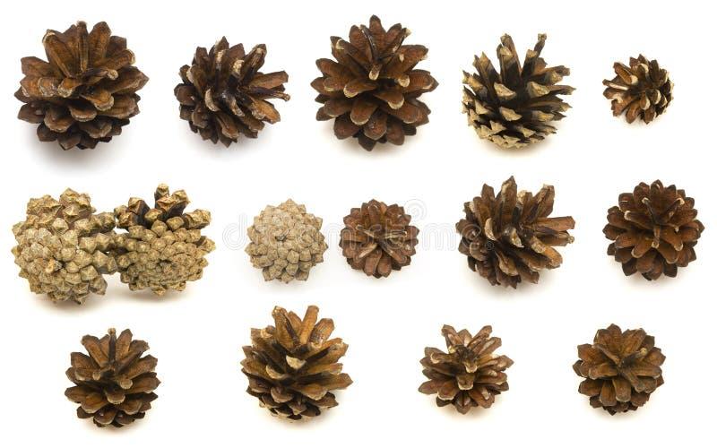 汇集锥体杉木圣诞节设计元素 免版税库存照片