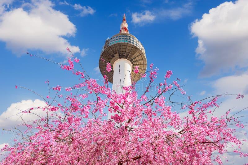汉城塔和桃红色樱花,佐仓季节在春天,汉城在韩国 库存图片