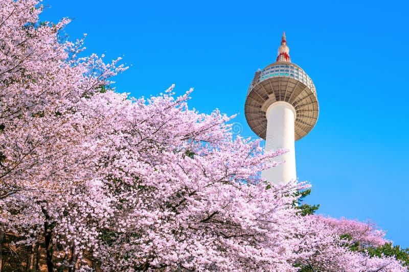 汉城塔和桃红色樱花 库存照片