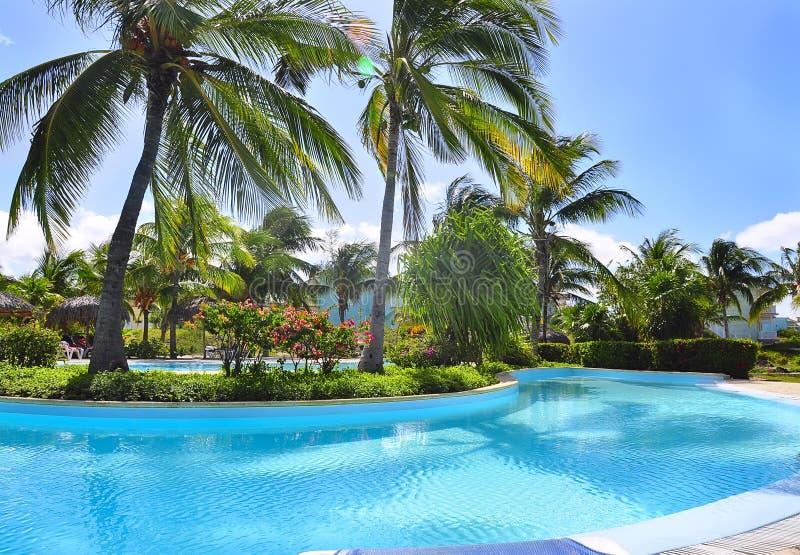 池和棕榈树 免版税库存图片