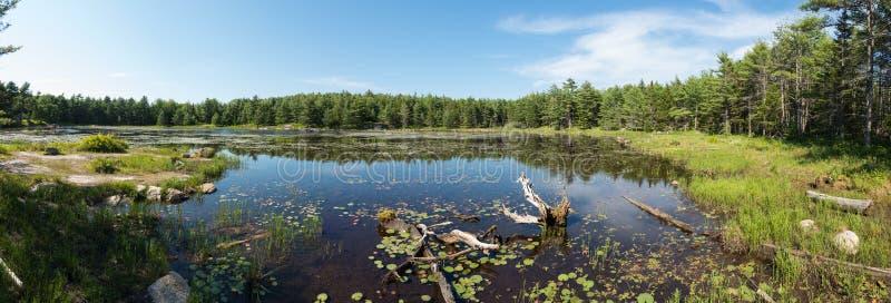 池塘全景 免版税库存图片