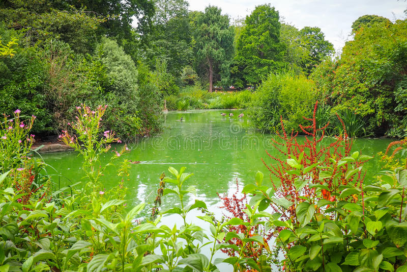 池塘包围与树和花在格林威治停放,伦敦 免版税图库摄影