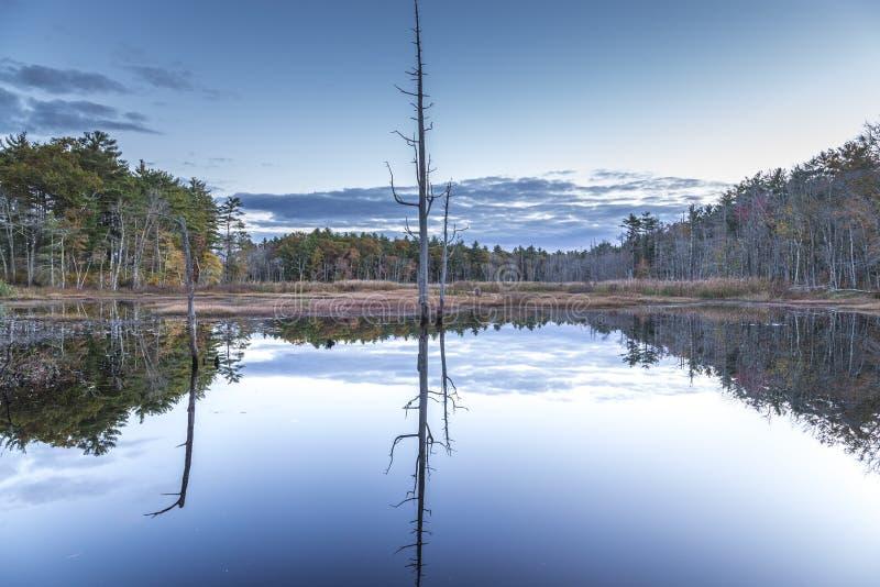 池塘反射 库存照片