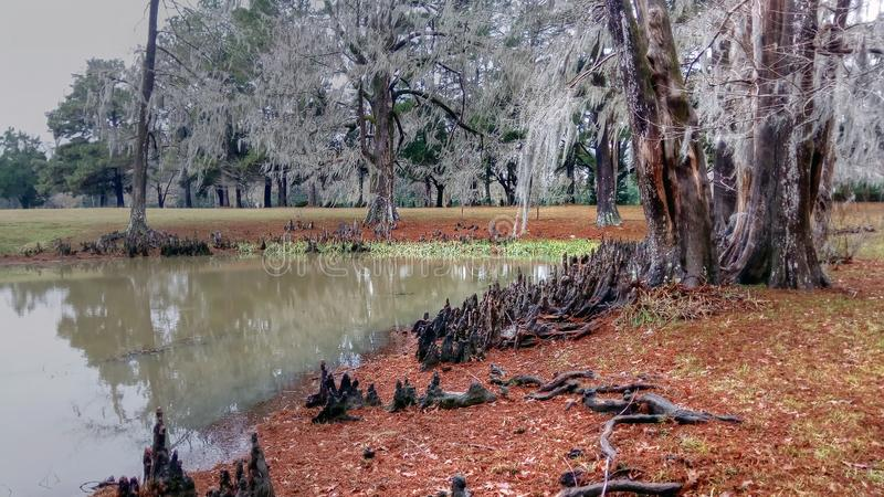 池塘和柏树的美好,但是令人毛骨悚然的捕获 库存照片