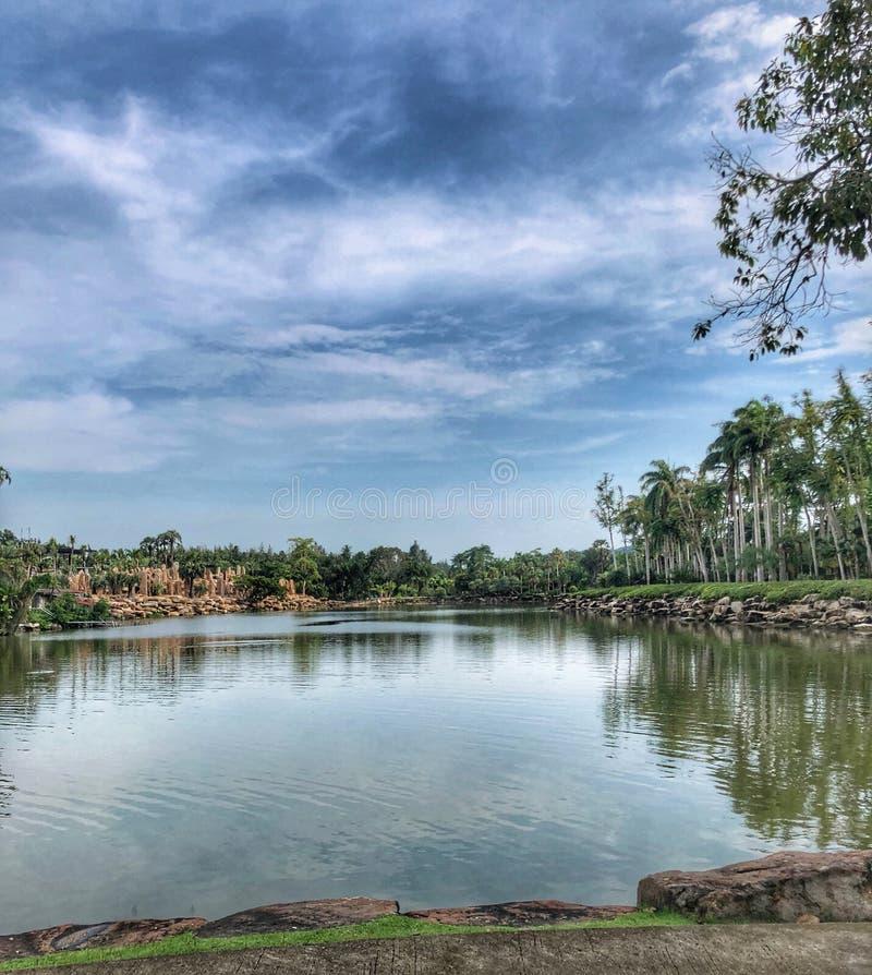 池塘和棕榈树 库存图片