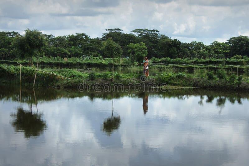 池塘和菜恶魔在库尔纳,孟加拉国 免版税图库摄影