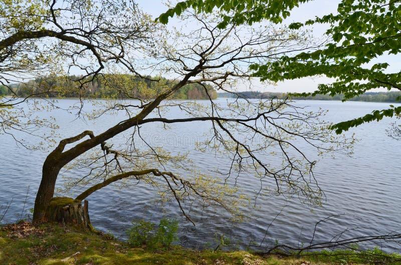 池塘在乡下,南波希米亚的Kaclezsky池塘 免版税库存照片