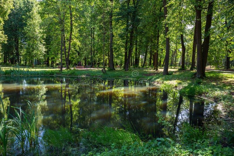 池塘在公园在夏天 免版税图库摄影