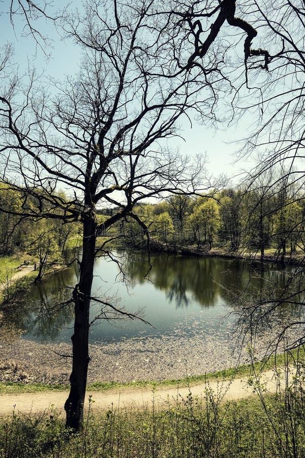 池塘在公园 库存照片