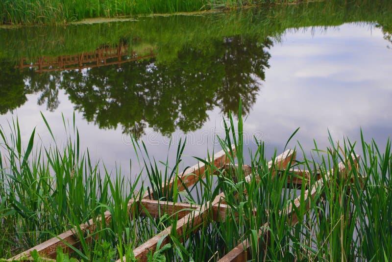 池塘在夏天公园 免版税库存图片