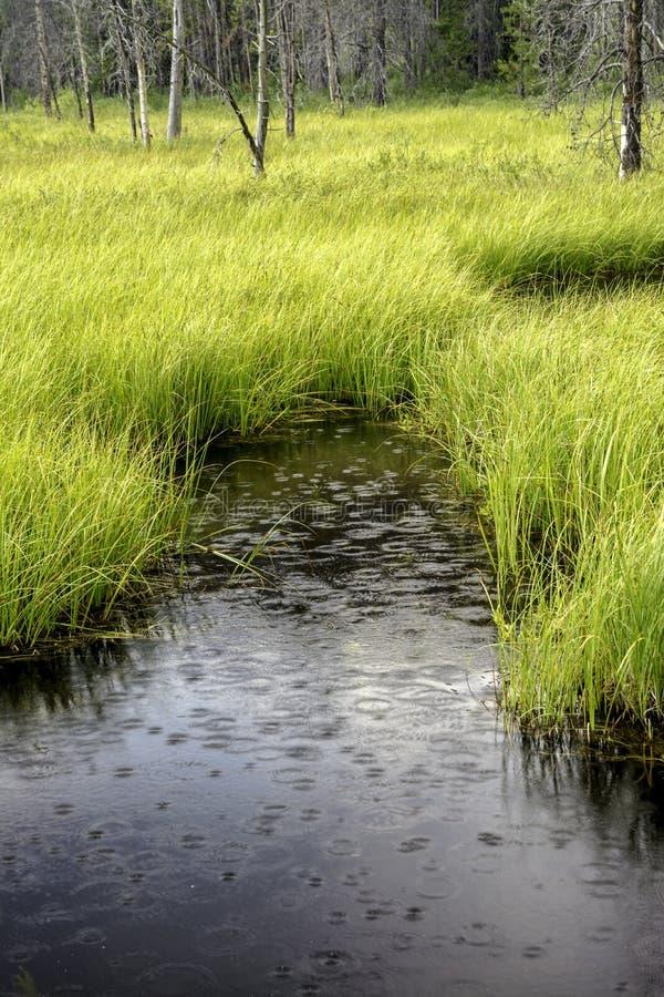 水池塘在有雨的森林滴下 免版税库存图片