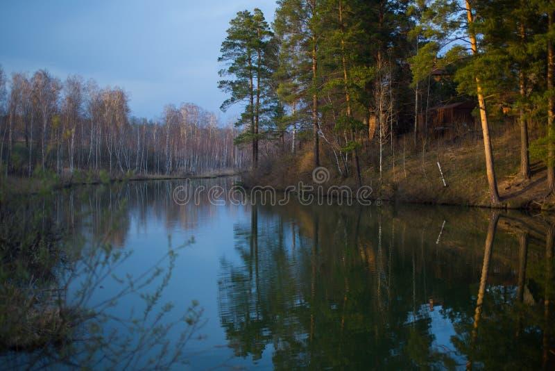 池塘在森林 免版税图库摄影