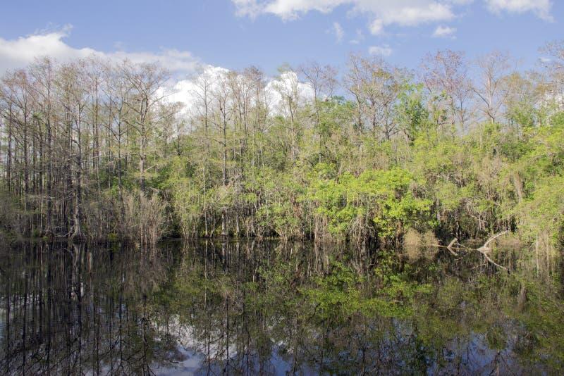池塘在泥沼蜜饯的沼泽视图 免版税库存照片