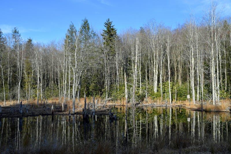 池塘在西维吉尼亚 库存照片