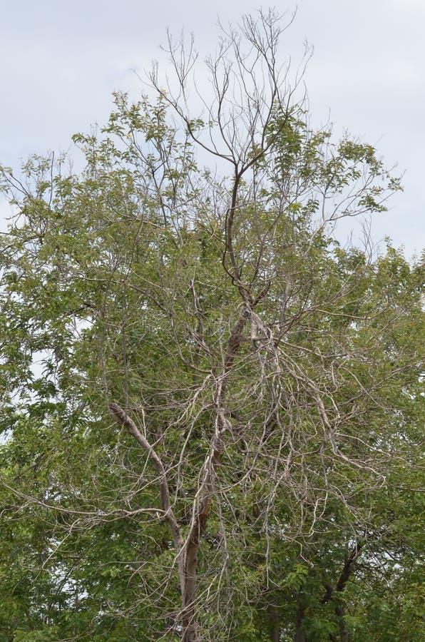 池塘松树 库存照片