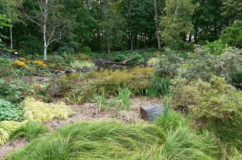 池塘森林和庭院树木园的 免版税库存照片