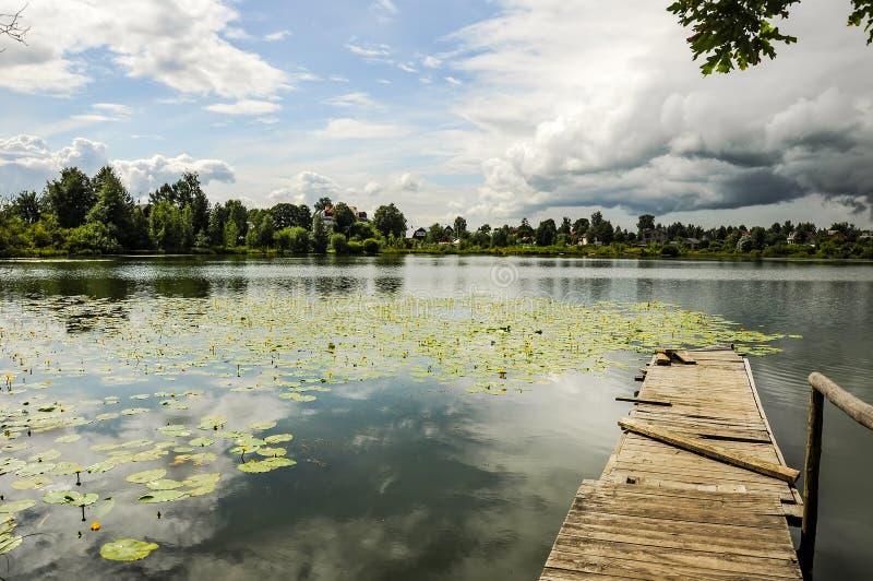 池塘用黄色荚 免版税库存照片