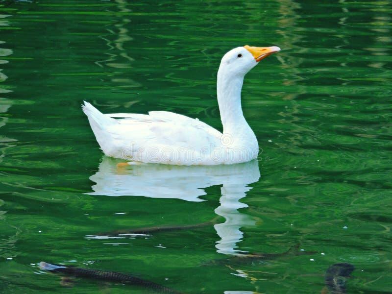 池塘秀丽  免版税库存照片