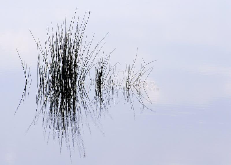池塘草反射 免版税图库摄影