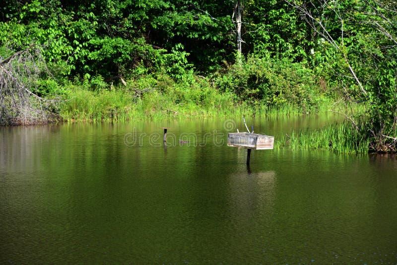 池塘视图 库存照片