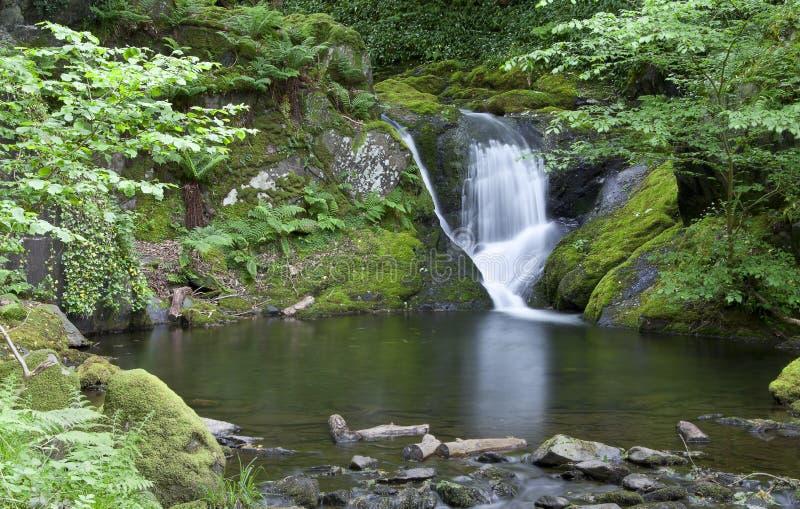 池瀑布 免版税库存图片