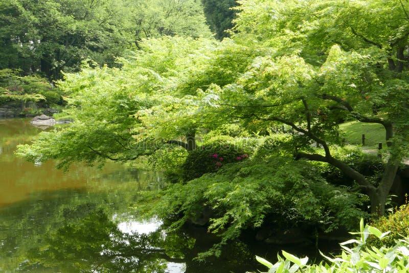 水池,植物,树在日本禅宗庭院里 图库摄影