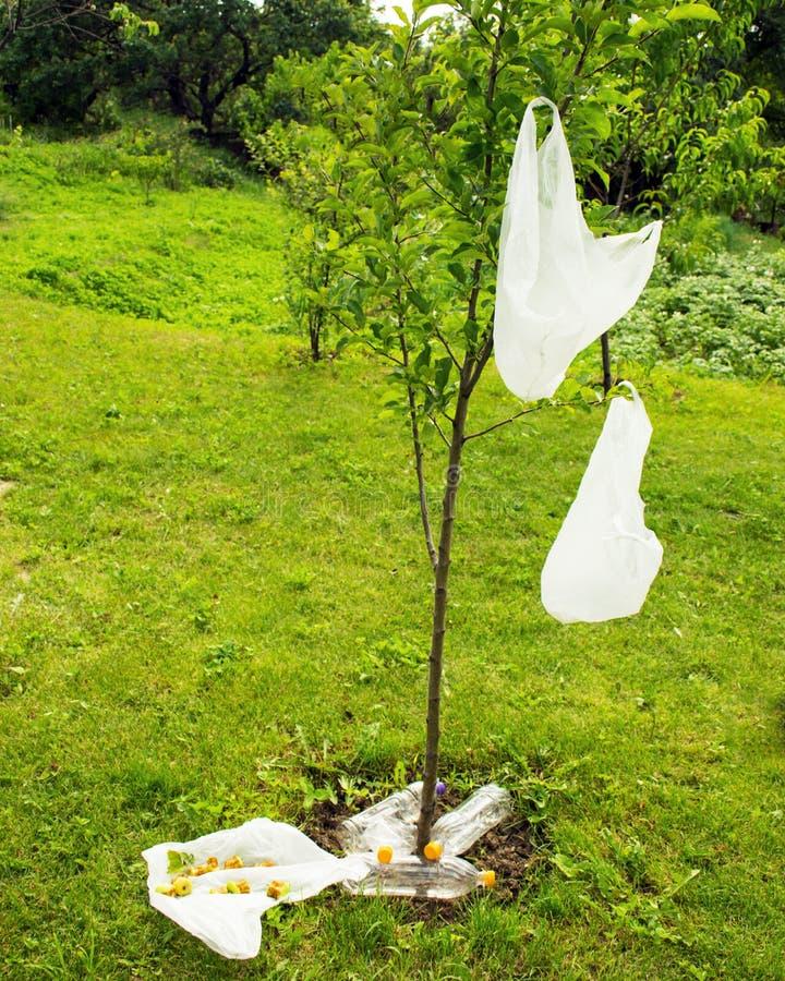 污染的问题 包裹在树垂悬 在草坪的垃圾 库存图片