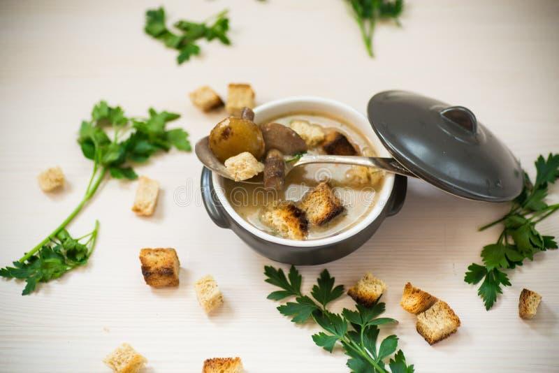 汤纯汁浓汤用蘑菇和油煎方型小面包片 库存图片