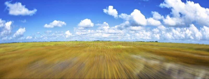 汽船足迹在佛罗里达沼泽地 库存照片