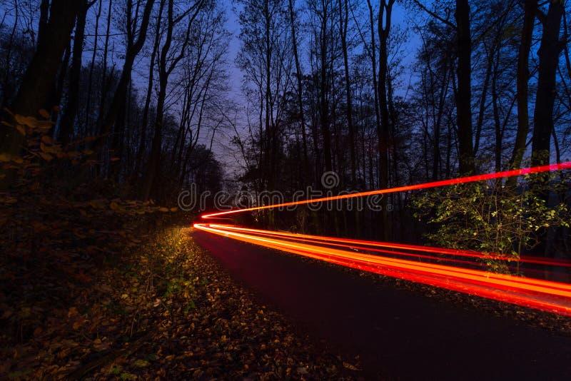 汽车光速迷离在一个森林里在晚上 免版税库存照片