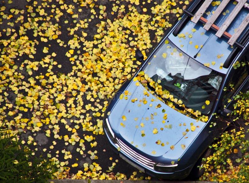 汽车撒布与秋天黄色在10月离开在一湿sidewal 免版税库存图片