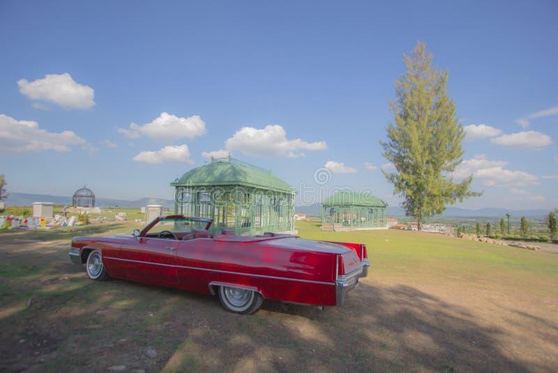 汽车树天空 库存图片